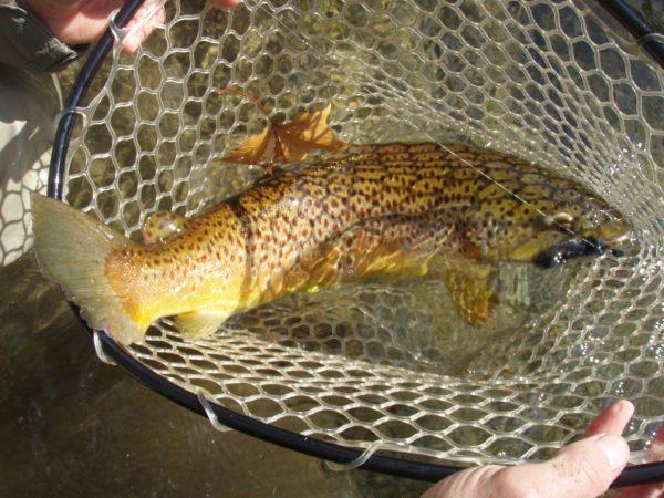 NC Fishing Reglations